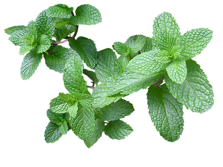 Herb, Mint, Cut Out, Isolated, Plant