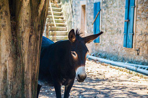 donkey images pixabay download free pictures