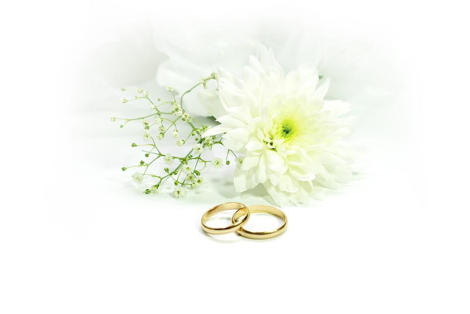 free photo wedding  rings  marry  gold free image on white rose clipart png white rose clipart frame