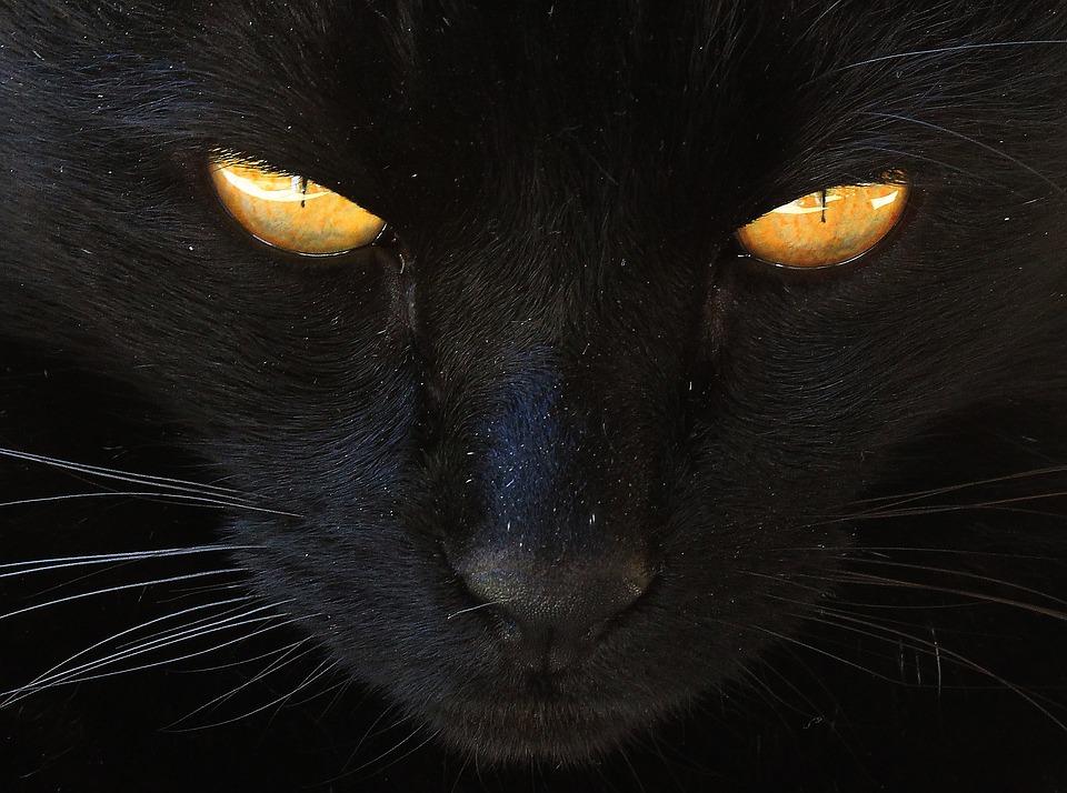 Кошка, Черная Кошка, Желтые Глаза