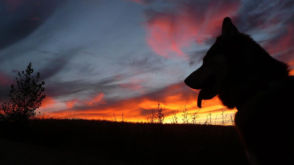Dog Silhouette Sunset ...