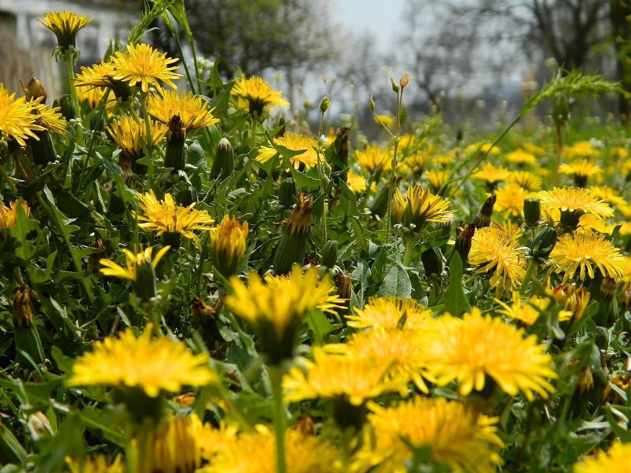 Дыхание весны фото себя