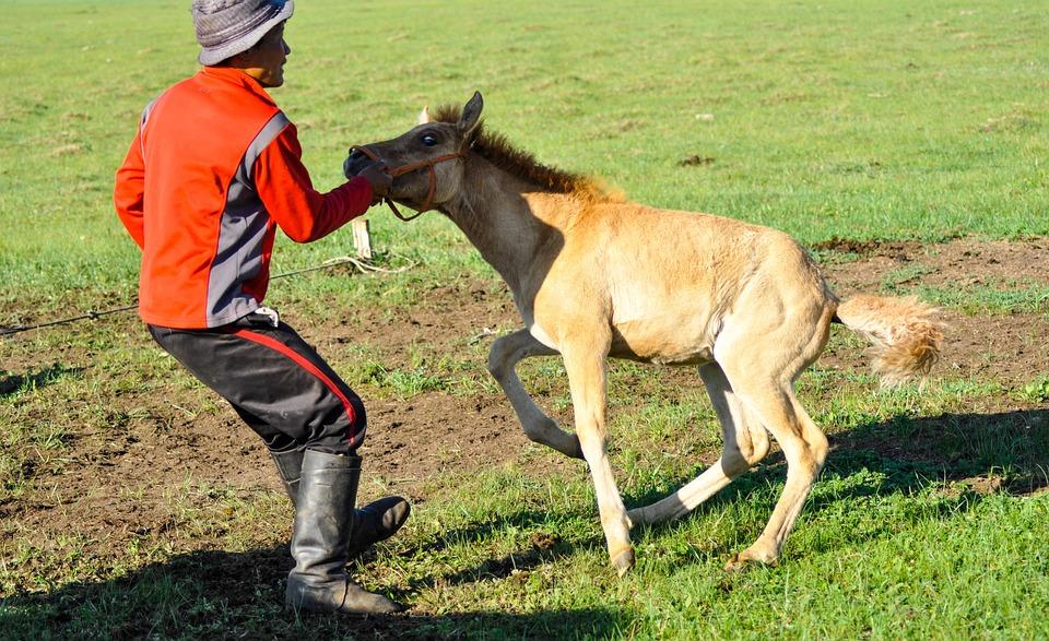 Pferde muschis