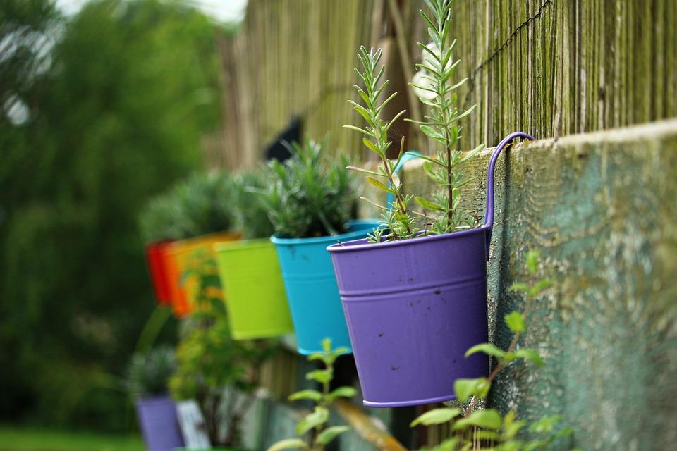Plant Pot, Multicoloured, Lavender, Plant, Pot, Rainbow