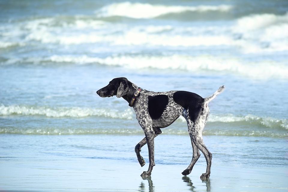 Viajar a Mallorca con perros