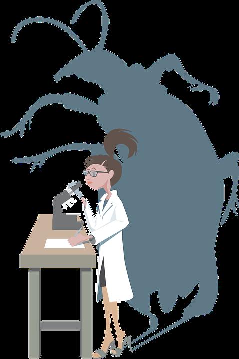 Escarabajo, Insecto, Investigación, Mujeres, Insectos