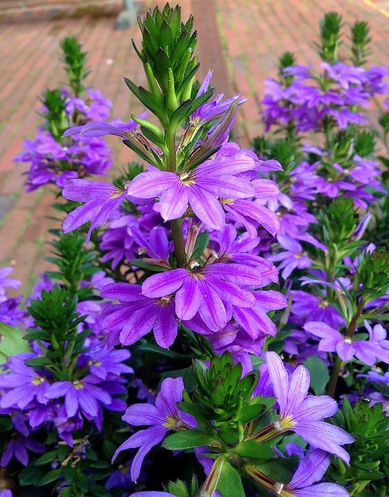 Flower Flowers Summer · Free photo on Pixabay