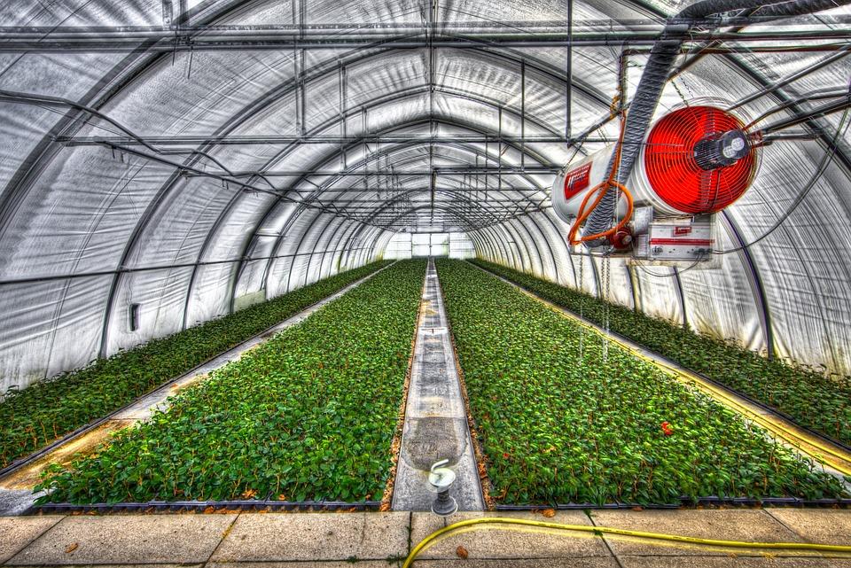 Image Result For Vegetable Garden Vector