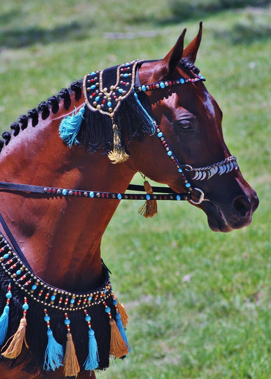 Arabian Horses Free Photo On Pixabay