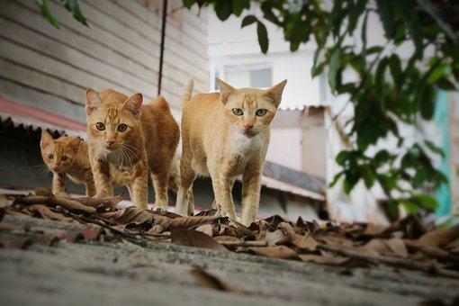 Cat, Walk, Three