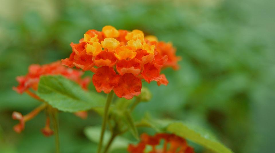 Fiori Gialli Giardino.Fleure Giardino Fiori Gialli Foto Gratis Su Pixabay