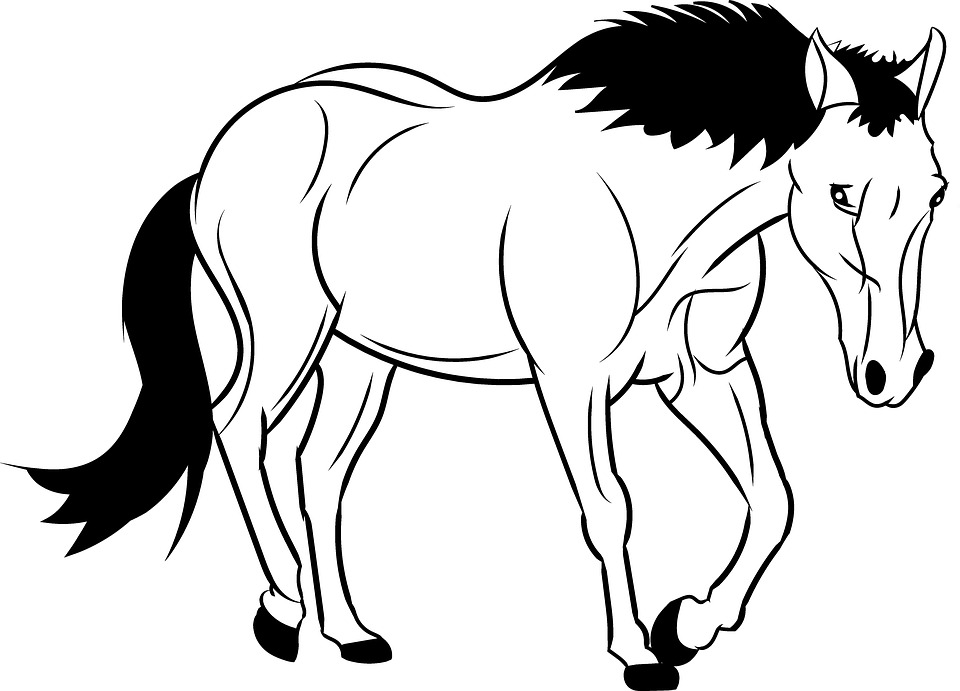 Paarden Manege Kleurplaten Horse Outline Animal Wild 183 Free Image On Pixabay