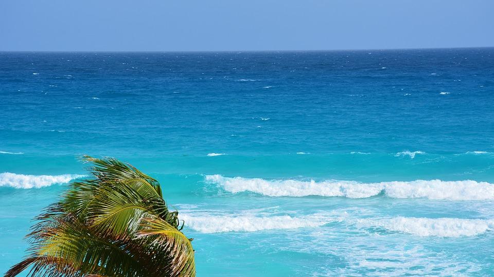 Beach Palm Tree Ocean Landscape Sea Palmas Nature