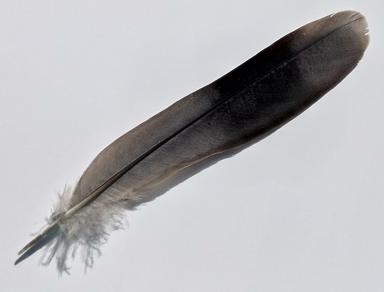 Перья птиц картинки с названиями птиц