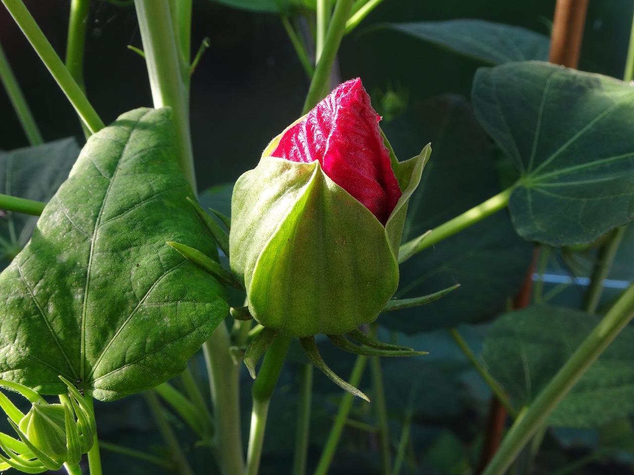 Тату цветы и узоры фото