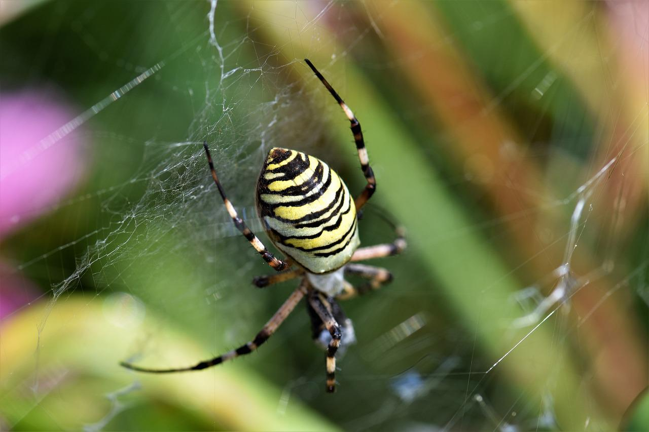 полосатый паук черно желтый фото и описание маникюр светлых