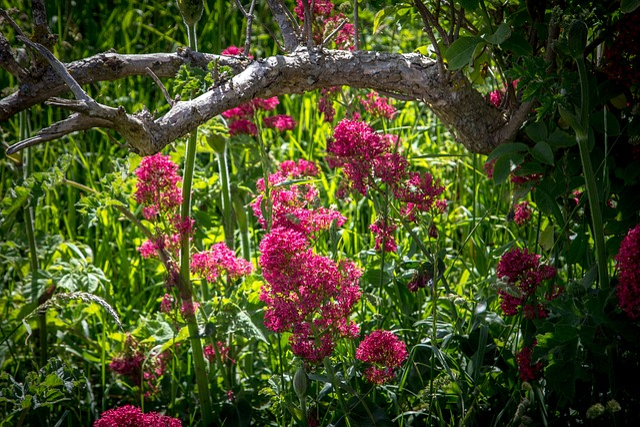 fleurs rose sauvage photo gratuite sur pixabay. Black Bedroom Furniture Sets. Home Design Ideas