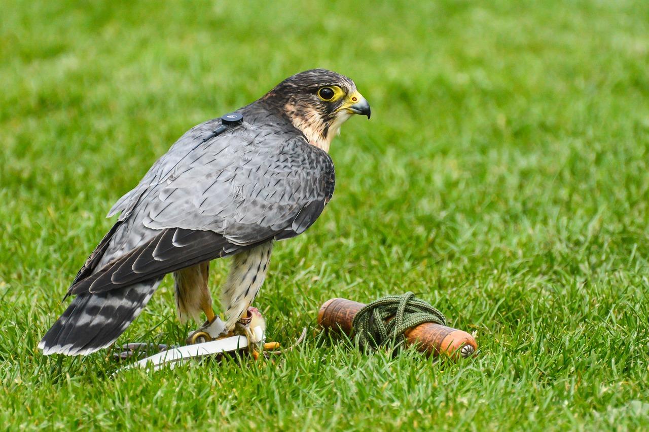 хищные птицы воронежской области фото с названиями славянского кирпичного