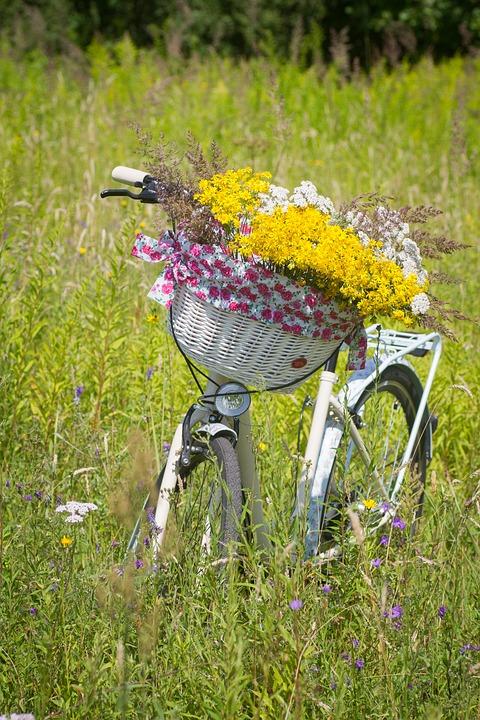 Bicicleta, Verão, Cesta, Ciclo, Passeio, Senhoras Ciclo