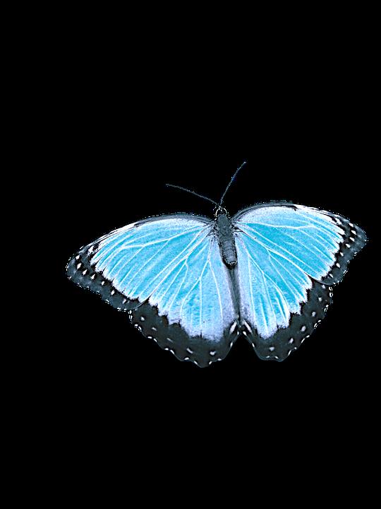 Schmetterling Ohne Hintergrund Kostenloses Foto Auf Pixabay