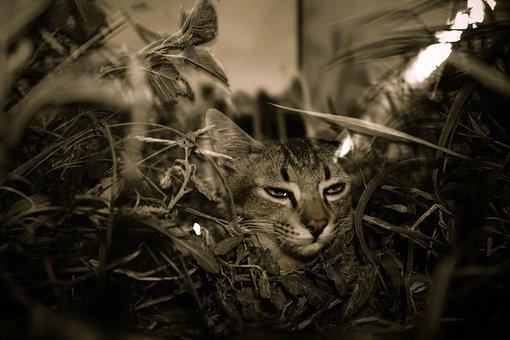 Grass, Cat, Tea With Dildo