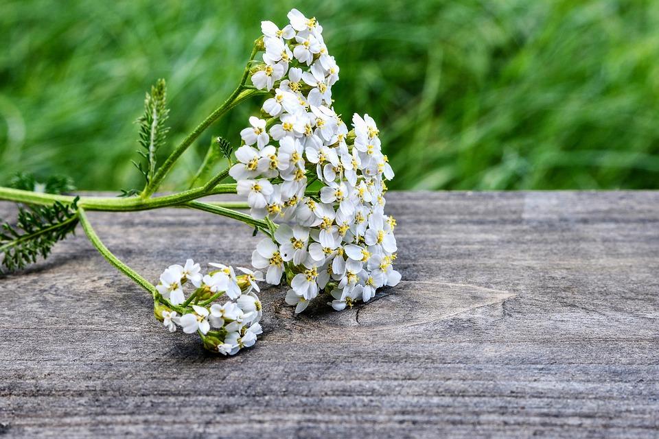 Achillea, Piante Selvatiche, Fiore Wildblume