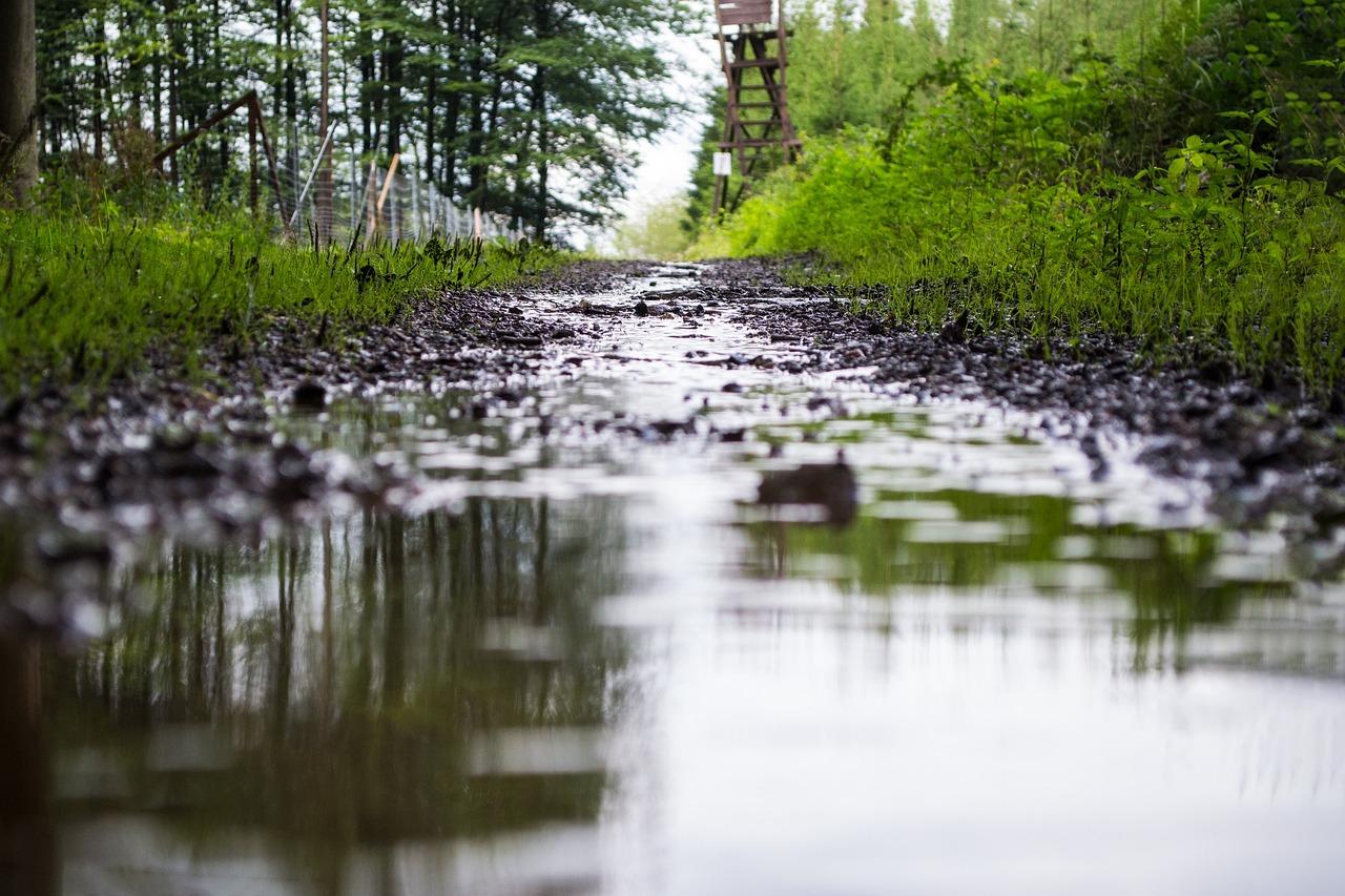 пушкина картинки на тему дождь в лесу этот