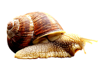 snail, animal, home