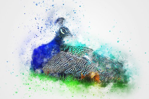 Unduh 47+ Foto Gambar Burung Merak Kolase HD Terbaru Free