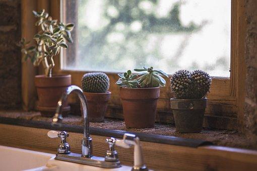 Cactus, Kitchen, Design, Interior, Table