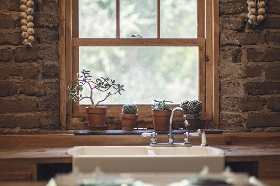 Garlic, Cactus, Window, Nature, Green, Food, House