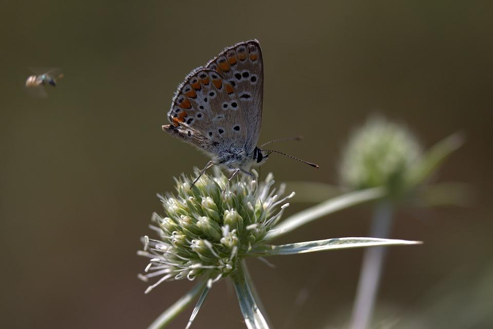 Coloriage Papillon Et Abeille.Papillon Coloriage Abeille Photo Gratuite Sur Pixabay