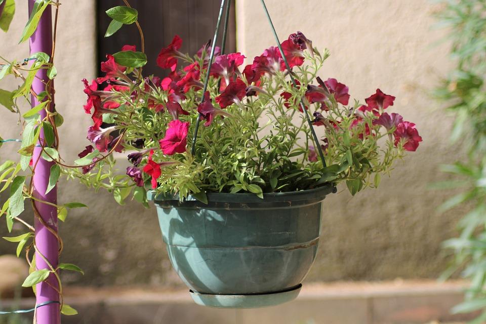 Blumen Topfblumen Blumentopf Kostenloses Foto Auf Pixabay