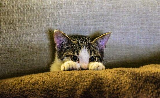 Kitten, Animal, Pet, Paws, Scaredy Cat