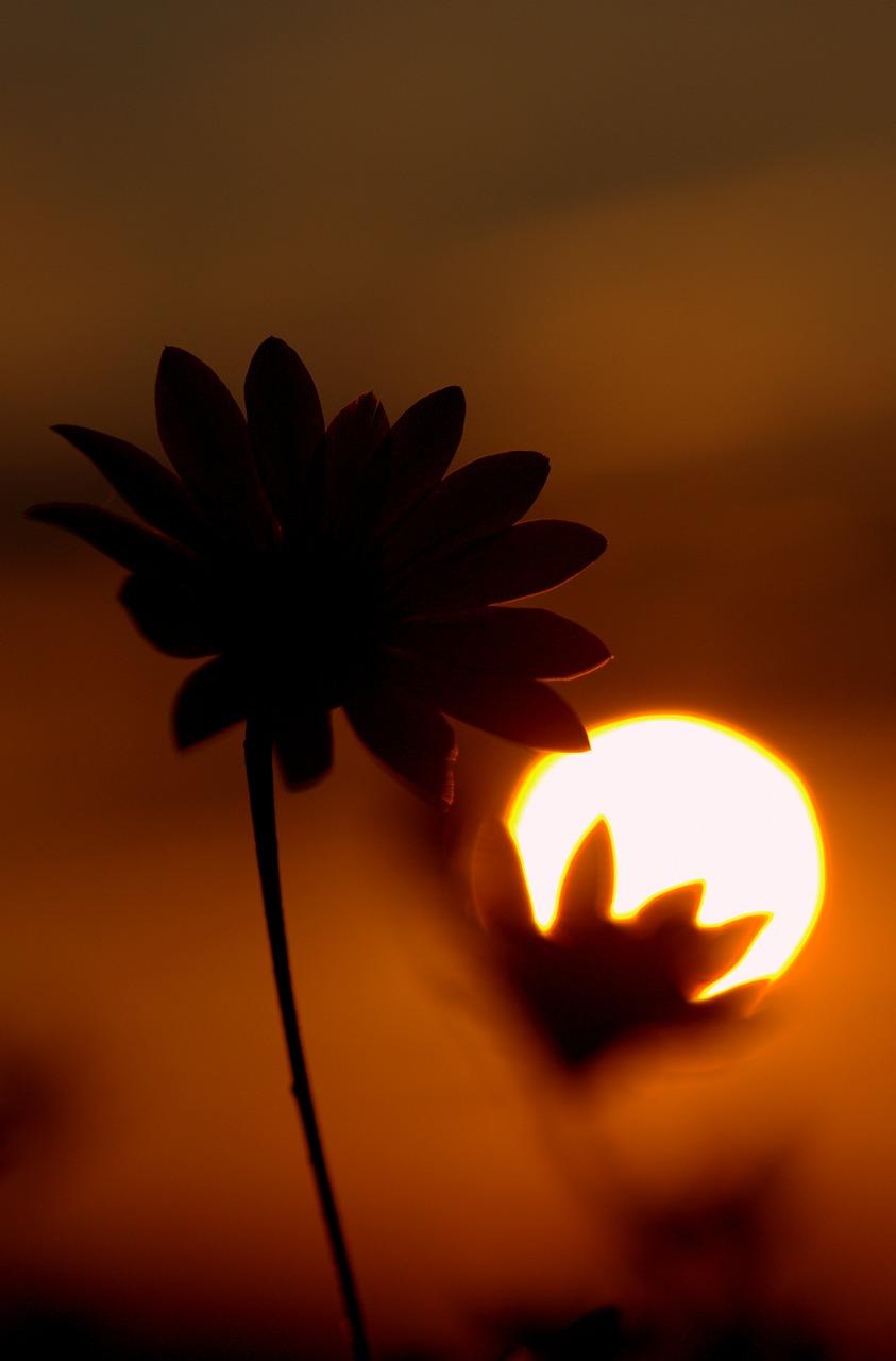 Картинка солнце и тень