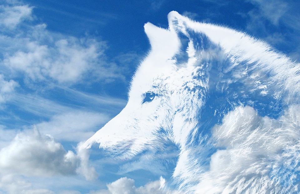 Wolf, Clouds, Heaven, The Atmosphere, Mythology, White