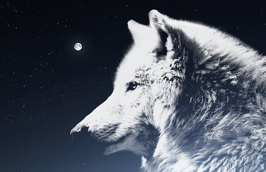 1 000 Free Wolf Pictures Images Hd Pixabay