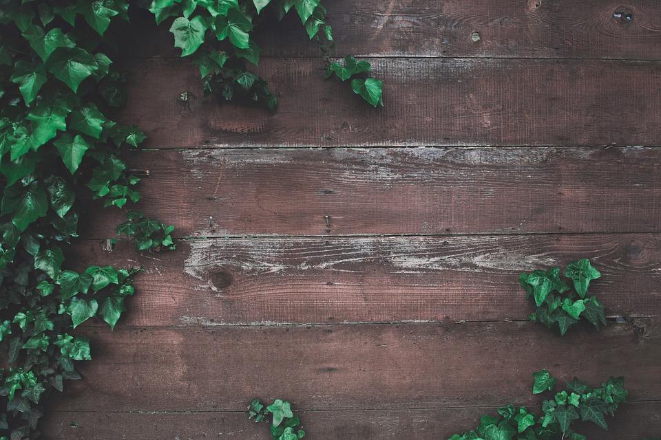 Holz Boden Grun Kostenloses Foto Auf Pixabay