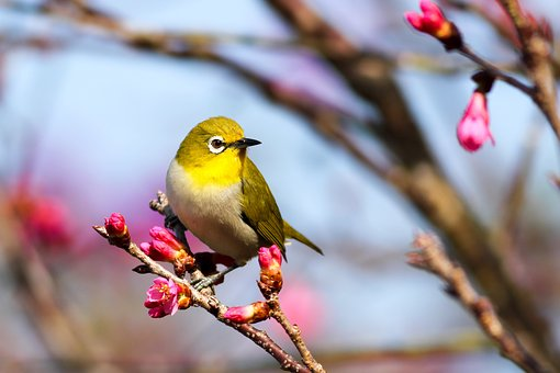 Bird Flower Images Pixabay Download Free Pictures