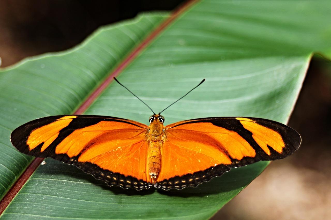 Бабочки фото тропические