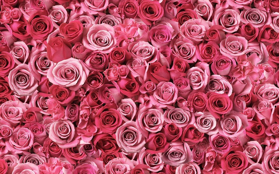 Roses Red · Free photo on Pixabay