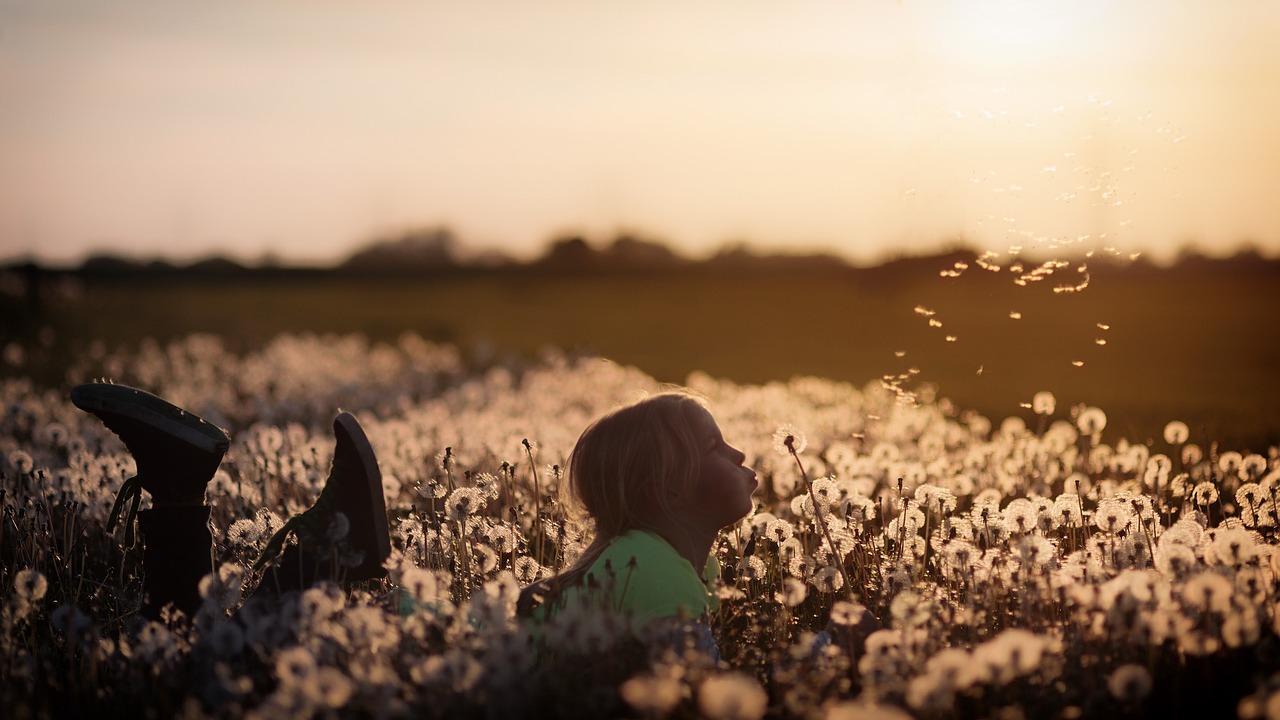 Flowers, Child, Girl, Dandelion, Field