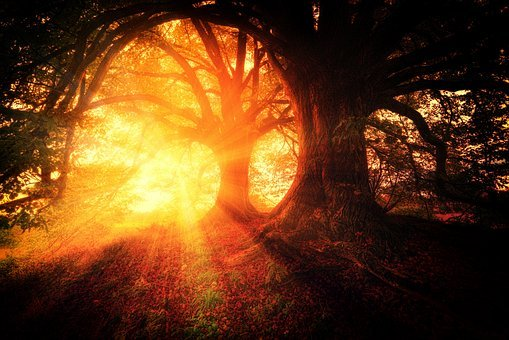 Trees, Plant, Nature, Forests, Sunrise
