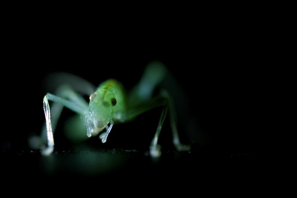 Insect groene krekel gratis foto op pixabay insect groene krekel kleine macro sluiten altavistaventures Images