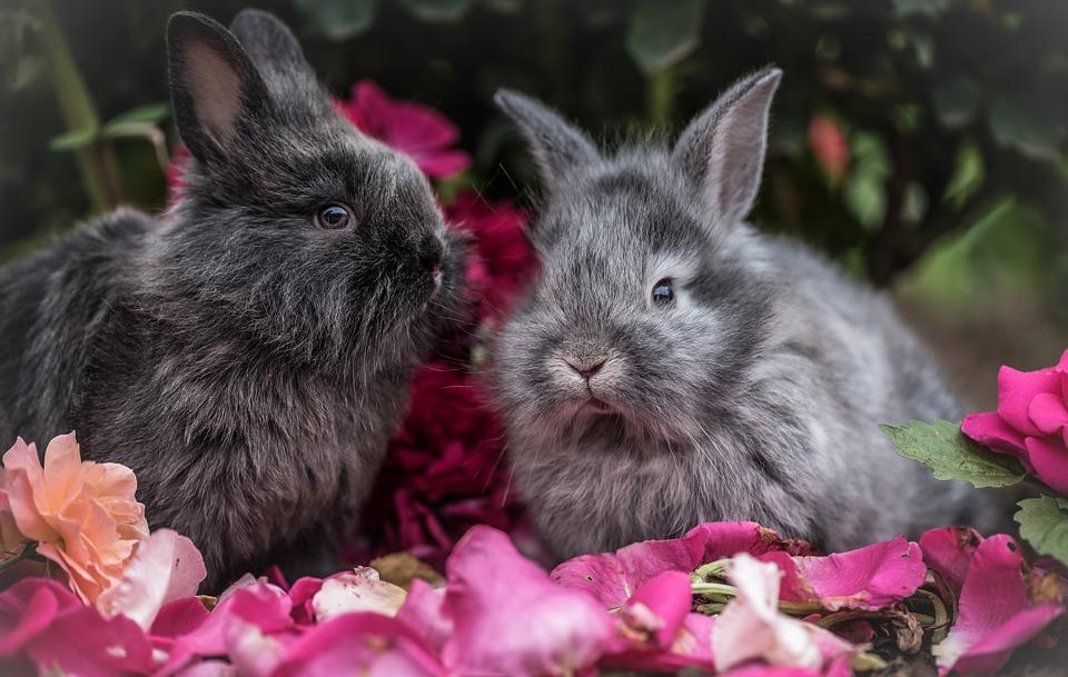 Rabbit, Pet, Animal, Flowers, Outside, Trees, Plants