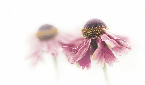 Fleur, Ampoulé, Rose, Fleurs, Automne