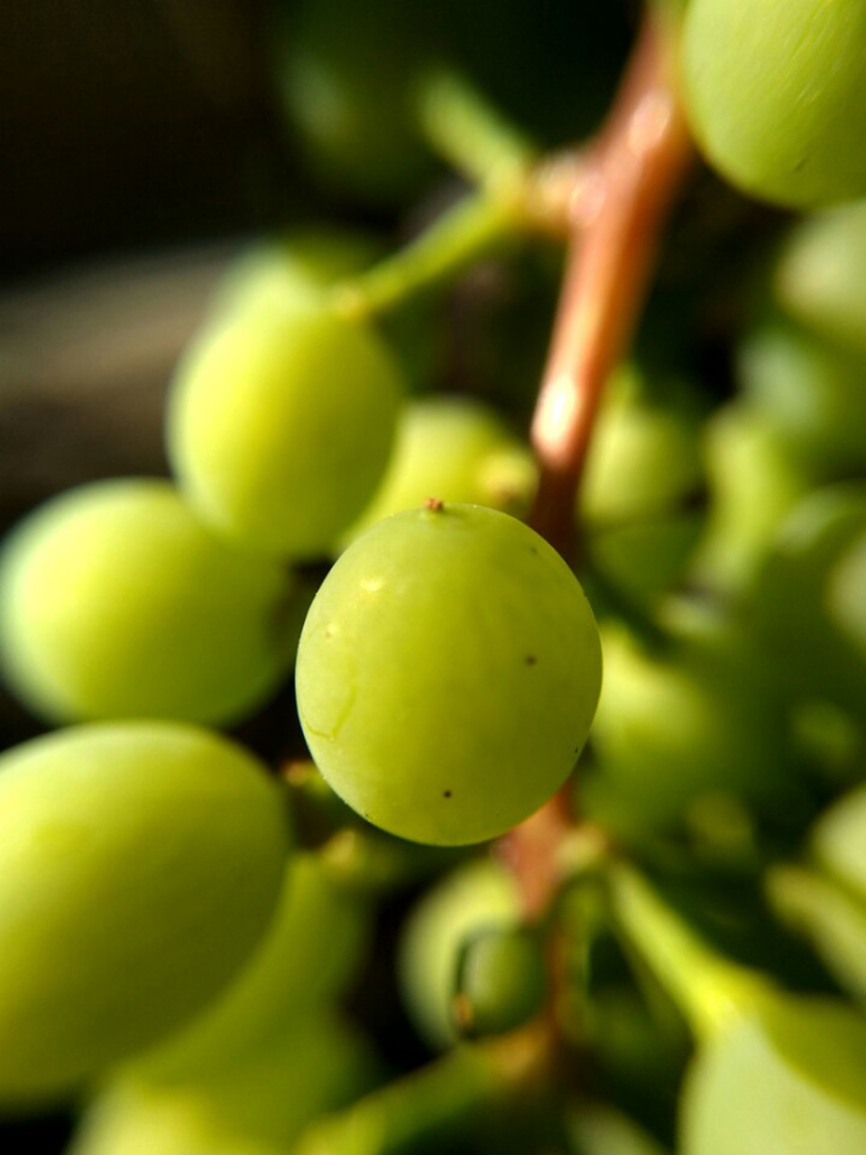 помощью зеленое вино картинки произойдет
