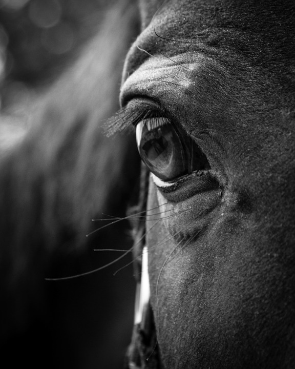 Horse eye head animal portrait mare equine