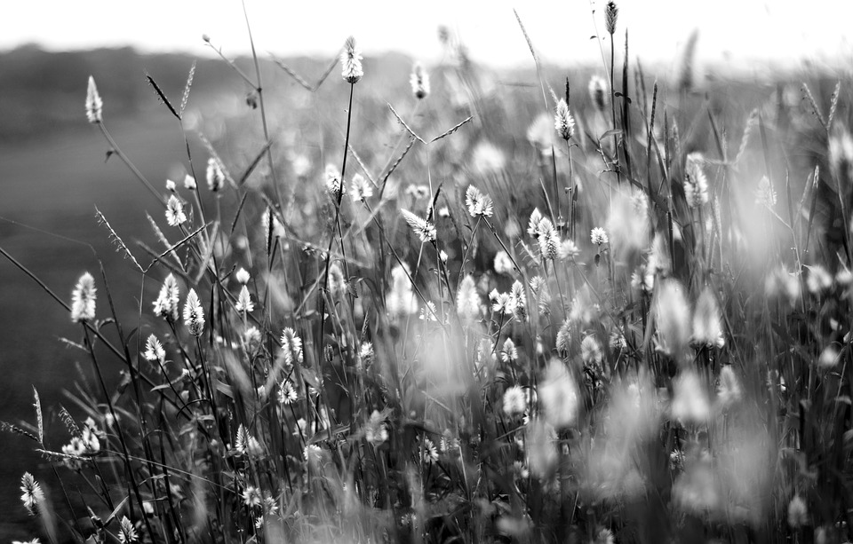 Flowers Black And White Flower