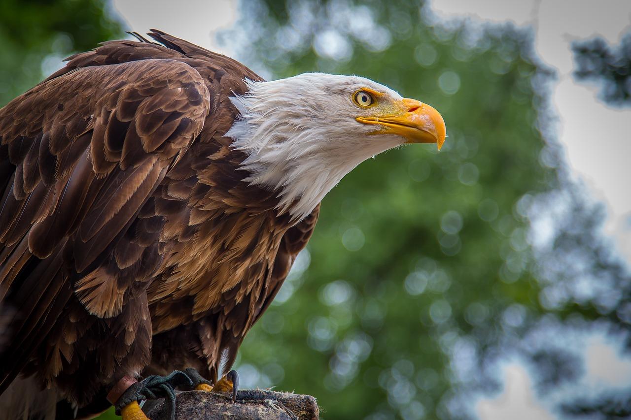 птицы орлан белохвост вас устраивает
